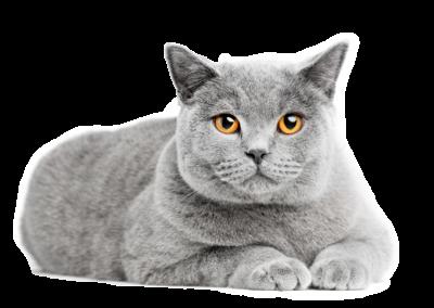L'asthme du chat
